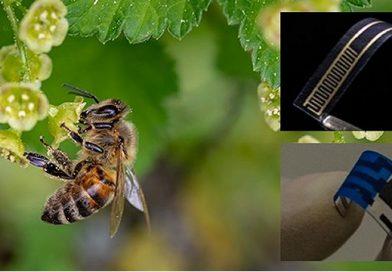 Sensor desenvolvido por cientistas utiliza molécula do ferrão de abelha na detecção de agentes bactericidas em bebidas e alimentos