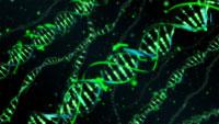 Análise das características compartilhadas e exclusivas de genomas filogeneticamente próximos